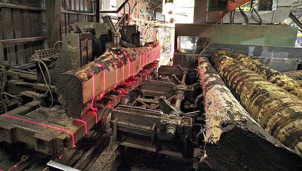 BIG THREAT: Lasers stripe a log on a machine that strips rough edges inside a sawmill at Anderson-Tully Lumber Company.   A shiny green bug is posing a threat Mississippi ash trees.